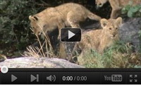 Video feed page - Awareness for Lions 2<