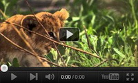 Video feed page - Awareness for Lions 3