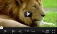Video feed page - Awareness for Lions 4