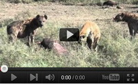 Video feed page - Awareness for Lions 5
