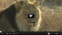 Video feed page - Awareness for Lions 7