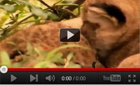 Video feed page - Big Cat Diary Series 2