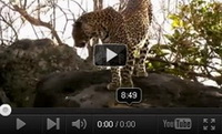 Video feed page - Big Cat Diary Series 4