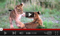 Video feed page - Big Cat Awareness
